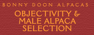Objectivity and Male Alpaca Selection by Eric Hoffman